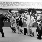 BIS Westminster 1976