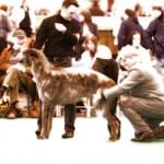 Crufts 2010