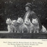 Mrs. C. Pacey, owner of the prominent Wolvey kennel, and five of her  champions - 1935. Type and uniformity are improved. (Photo: Thomas Fall)