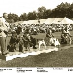 Mr. Harry Lumb Judging The Terrier Group - 1953