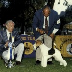 The Wire Fox Terrier, Ch. Starring Joint of Santeric, at Great Western winning under judge  Mr. Peter Winfield from England
