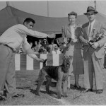 1946 · Ch. Roy-el Tiger Lily - Best at Airedale Specialty Handler - Mr. Ric Chashoudian Judge Mr. Alva Rosenberg  Trophy Presenter - Mrs. Frank Porter Miller