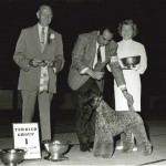 Beverly Hills Kennel Club - 1964 Judge: Mr. Percy Roberts Ch. Melbee's Chances Are Shown by Ric Chashoudian