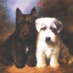 Scottish Terrier and Sealyham Terrier,  painted by British artist Lilian Cheviot (1894-1940)