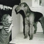 1946 - Ric's First Show Airedale - Ch. Roy-El Tiger Lily