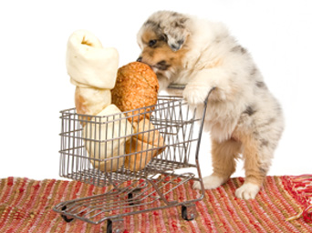 Cyber monday pet supply deals canine chronicle for Akc dog food