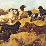 CC-Mastermind Fuller&Sussex Spaniel34.Field Spaniels 20th century, A.Wardle1906