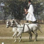 Situated in the heart of Europe, Hungary is the  country of pusztas, with herds and herdsman in traditional horse riding.