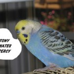 "Tony the parakeet shrieks, ""Tony hates Percy."""