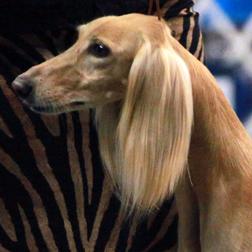 Topeka Dog Show