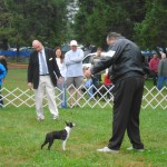 4-6 M puppy comp Suffolk