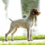GCh-Mt-View-Ripsnorters-Silver-Charm