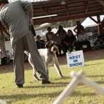 GCH MT VIEW'S RIPSNORTER SILVER CHARM