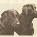 1932 - Labradors exhibited by George V