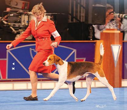 Cyclone Country Kennel Club Dog Show