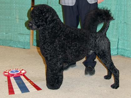 Dog Show Wichita Ks
