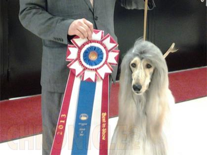 Dog Show In Burlington Iowa