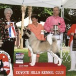 bell best in show