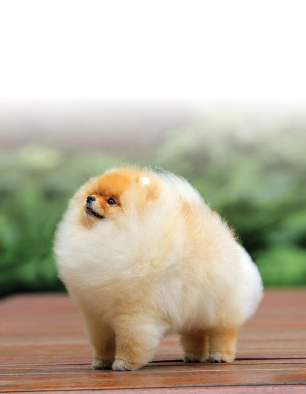Bad Haircuts | Canine Chronicle