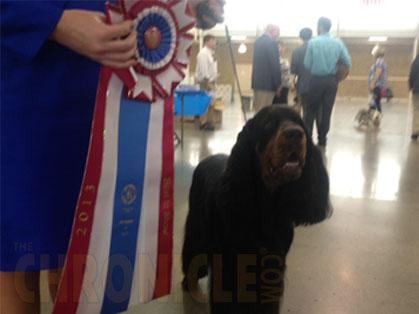 Dr Robert Smith Dog Show Judge