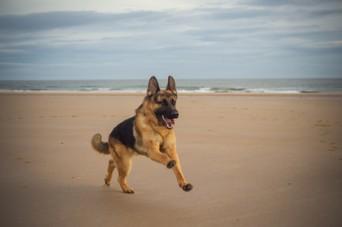 CC Beach Dog
