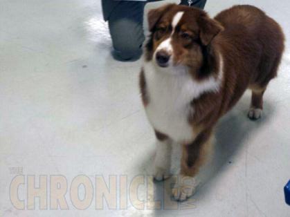 Oshkosh Kennel Club Dog Show