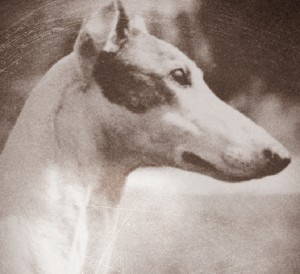Windholme Kennel: Putting Greyhounds on the Map   Canine Chronicle