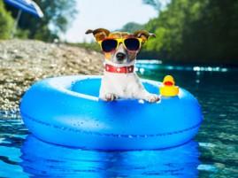 CC Summer Dog