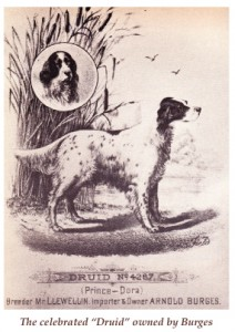 The English Setter – America's Oldest Gundog | Canine Chronicle