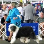 GCh. Export For Britz Royal Croft
