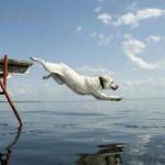 CC dog leap