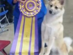 Gch. Hundehaven's Kendall CGC