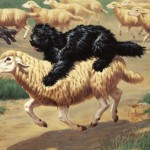 F CC-Hungarian Sheepdogs.Puli02.Puli on sheep.Ca.1950.Walter A.Weber
