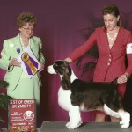 Bronze-GCh-Wynmoor-Sweetgrass-White-Diamonds