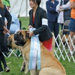 GCH-Eastwind's-Ivory-Touche