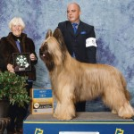 GCH-Majestique-Brave-Heart