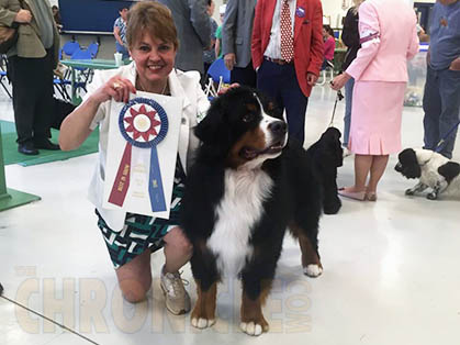 Oshkosh Kennel Club Dog Show