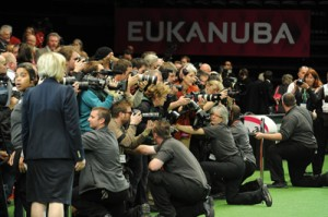 Trade Stands Crufts 2015 : Crufts u england is dominated by a russian scot with an