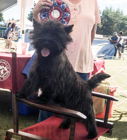 Rogue Valley Kennel Club NOHS Results – Thursday, November 3