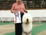 GCh. Barkshire's Uncle Sam