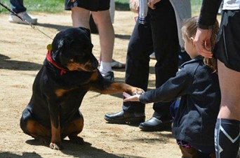 ACE1Wynd Therapy Rottweiler