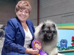 B Mi Keeshond Keeshond Fanciers of T...