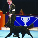 BISS GCH. Gwenadillo Seeka's Star CGC