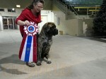 GCh Autumn Oaks Silver Lining ILl Be Your Huckleberry