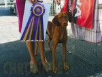 GCh. Russet Leather Ride To The Top