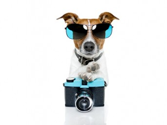 Canine Reporter
