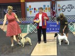 GCh Winsomes Home Run For Nirvana