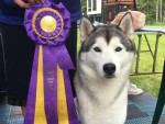 GCh. Rybrook's Appearance Rules The World