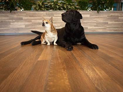 Hardwoof Wood Flooring Line For Pet Owners Leads Industry