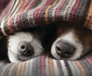 Carmen Battaglia Breeding Better Dogs